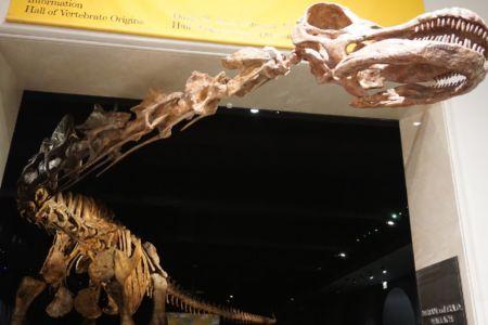 The Titanosaur